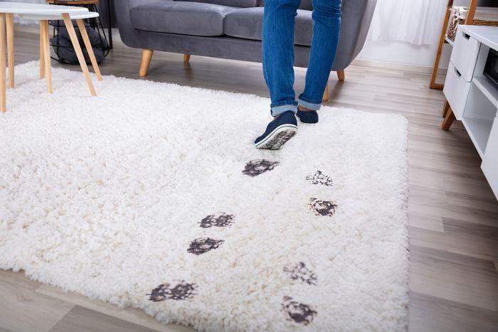 Steam Clean Wool Carpet